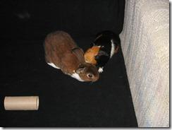 Hammie grooming Radar