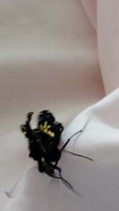 Second butterfly 1